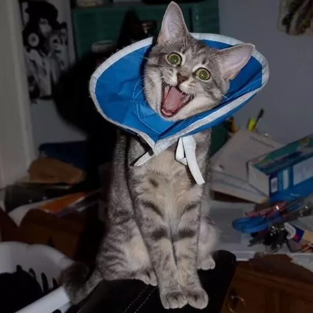 happy cat though.jpg