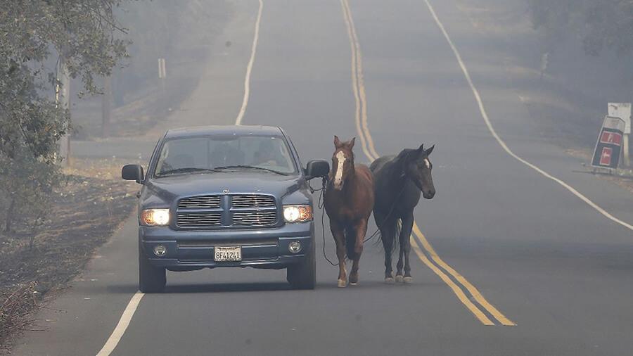 Residents Pleaded For Help Evacuating Horses