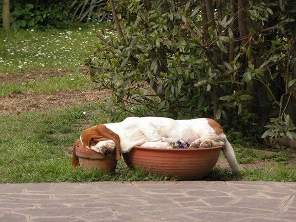 hound-in-pots.jpg
