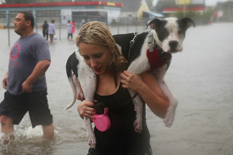 Rescued From The Hurricane Harvey Floods