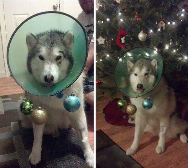 husky pride cone.jpg