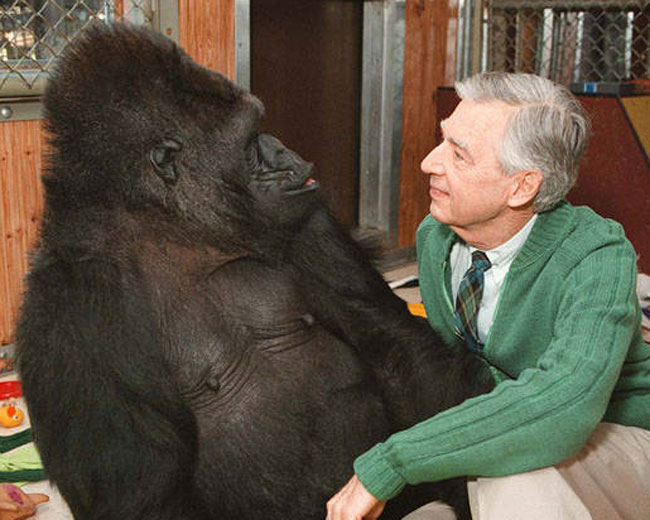 He Was Really Good Friends With Koko The Gorilla