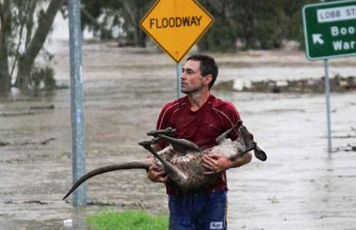 The Kangaroo Gets Rescued