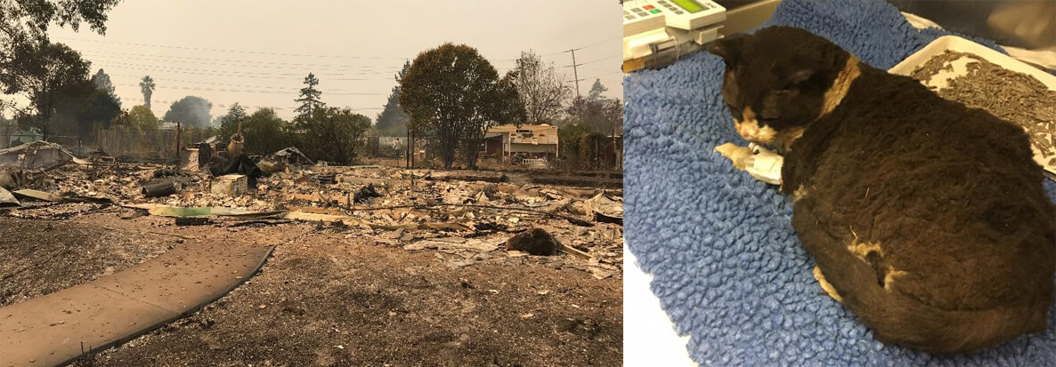 Coffey Park Residents Left Everything Behind