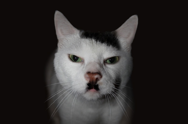 Watch Out For Kitler
