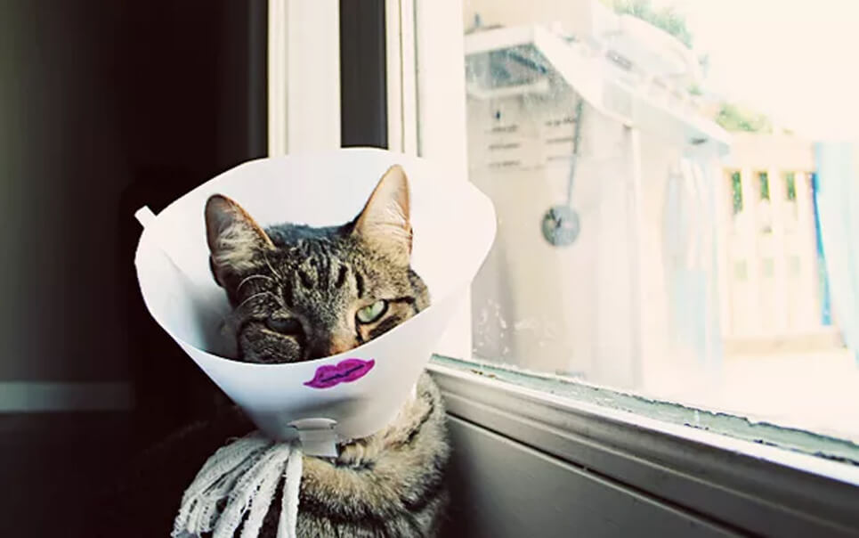 kitty cone thinggg.jpg
