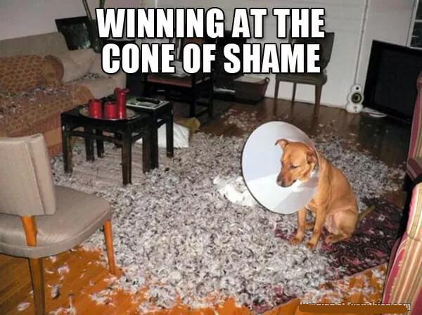 mad dogger dog.jpg