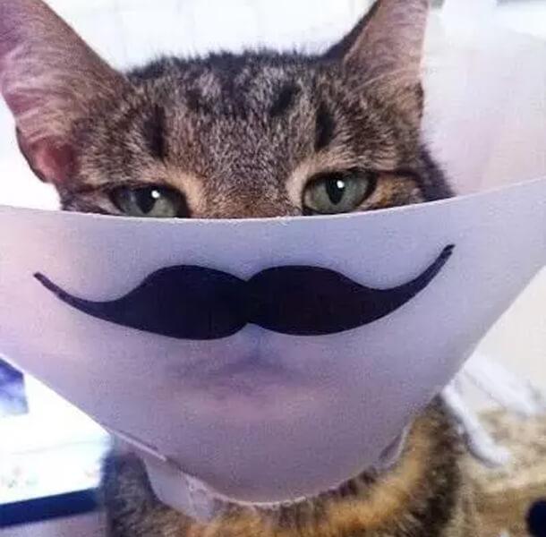 mean mug catt.jpg