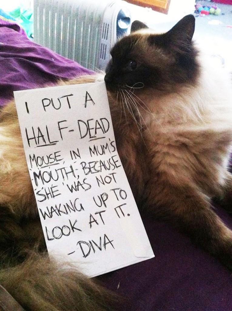 Disgusting Diva