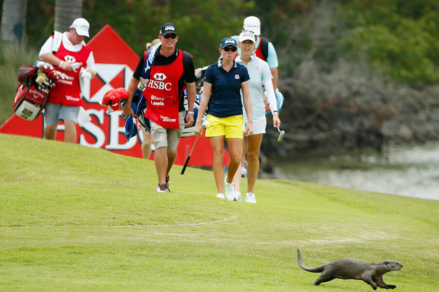 otter on the links.jpg