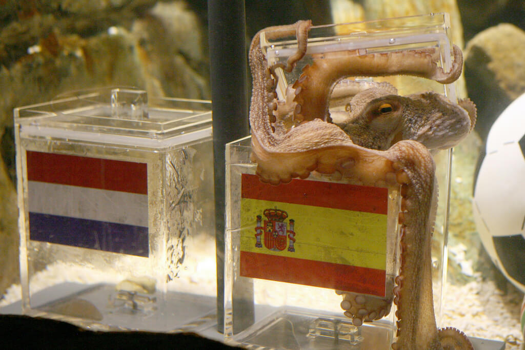Paul The Octopus Correctly Predicted All Of Germany's Matches At The 2010 World Cup