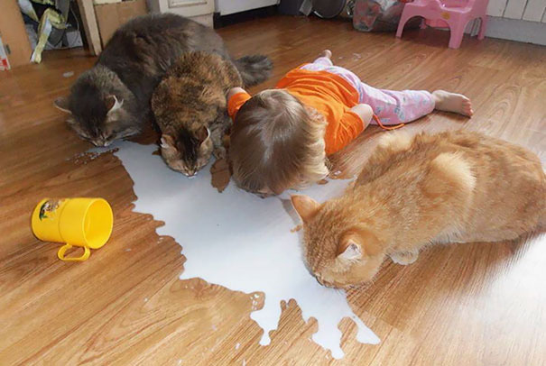 Lapping Up Spilled Milk