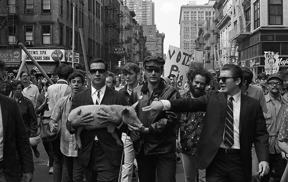 Pigasus the pig almost ran for President in 1968 until he was arrested by Chicago police