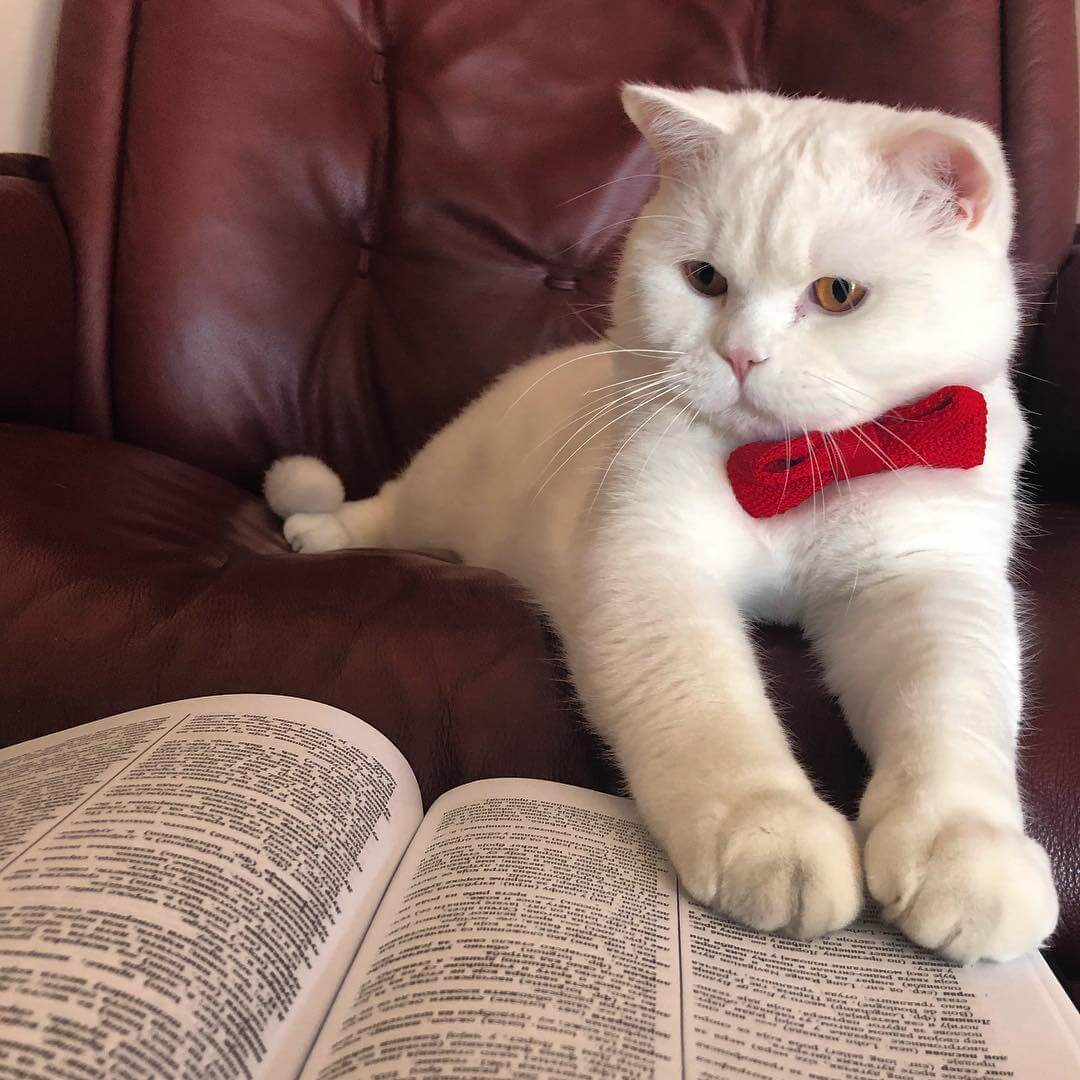 reading kitty.jpg