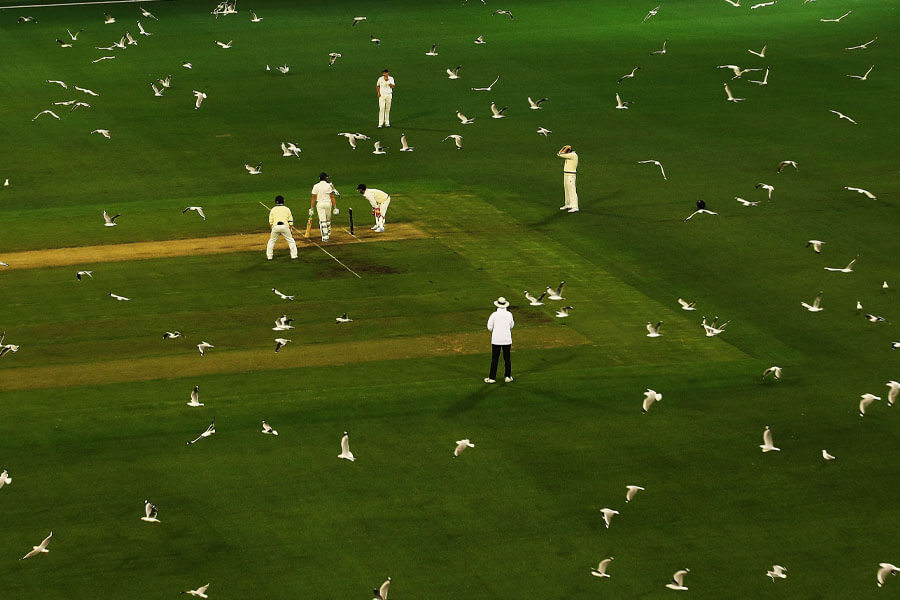 seagulls cricket.jpg