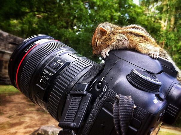 squirrel-on-camera.jpg