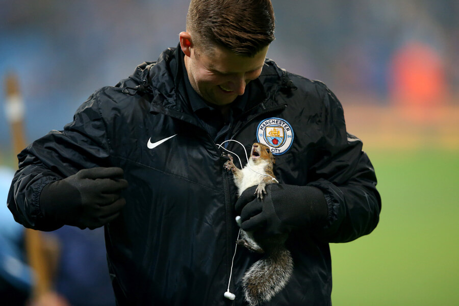 squirrel on the pitch.jpg