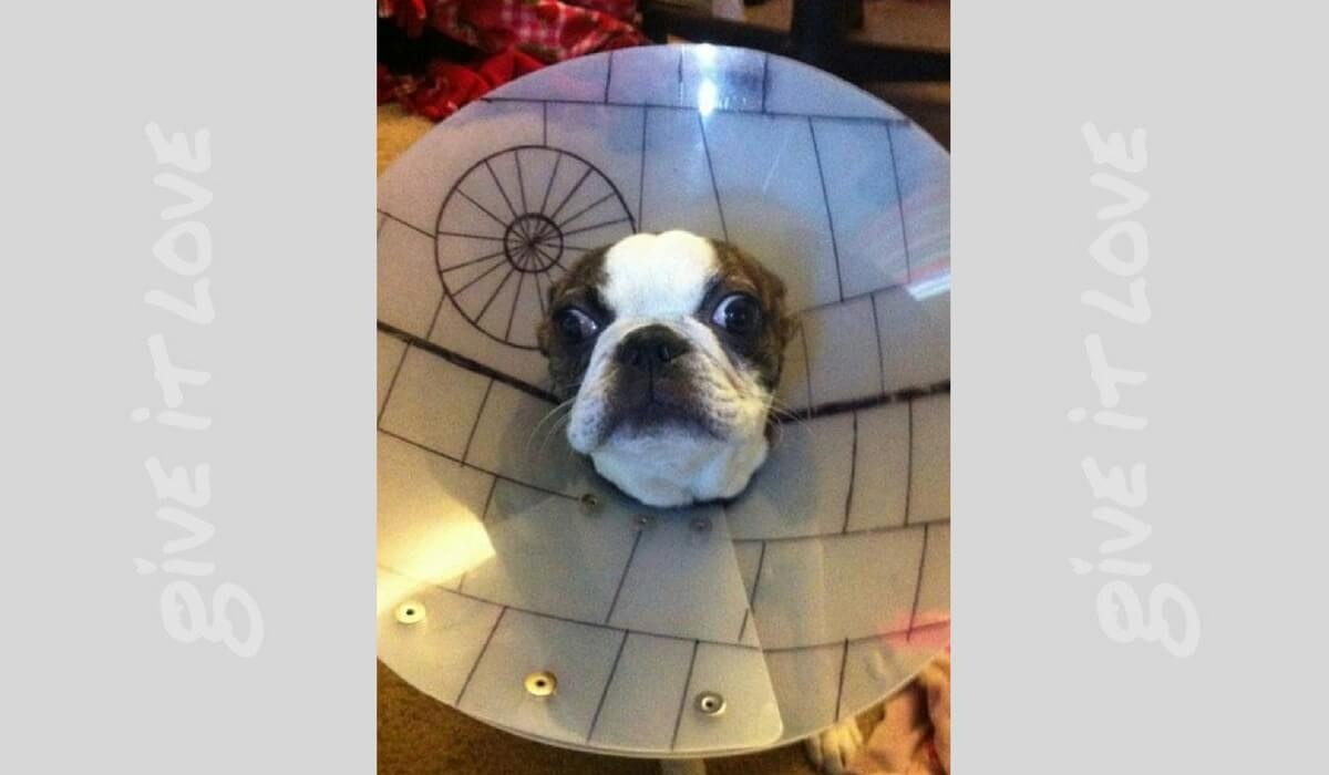 starwarsdogs12.jpg
