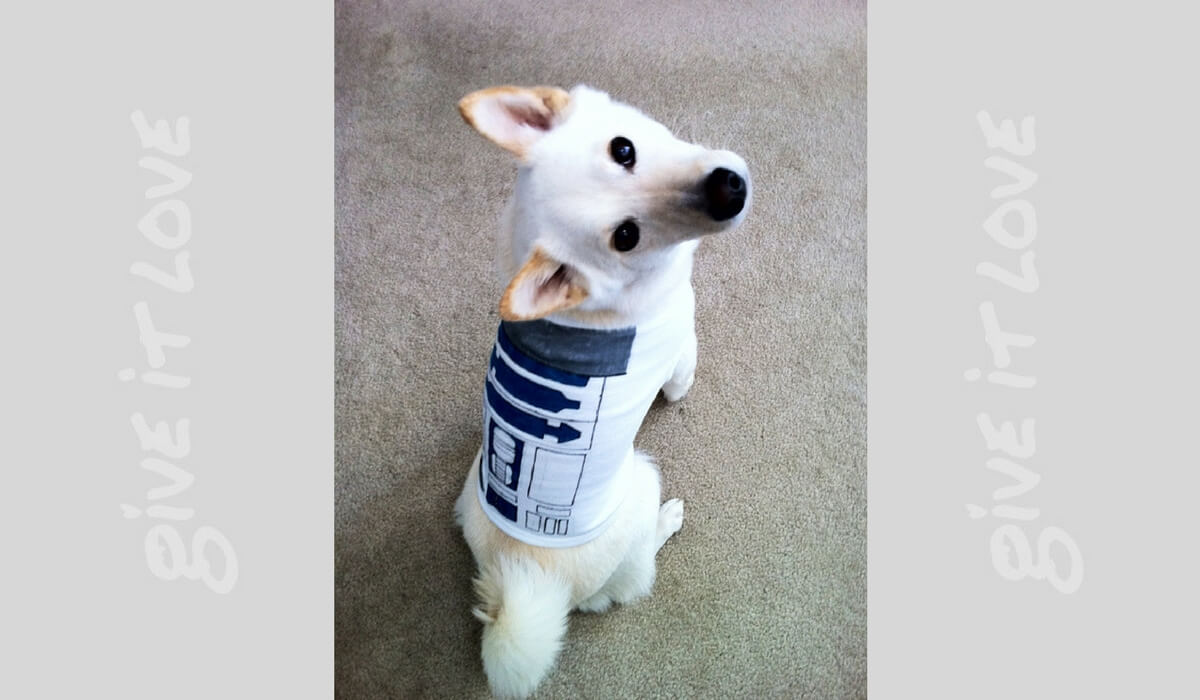 starwarsdogs14.jpg