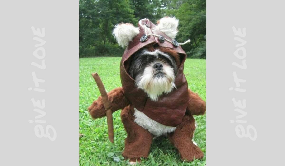 starwarsdogs15.jpg