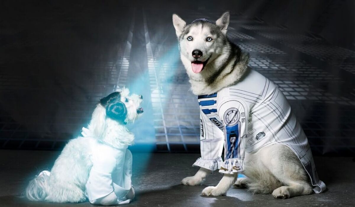starwarsdogs18.jpg