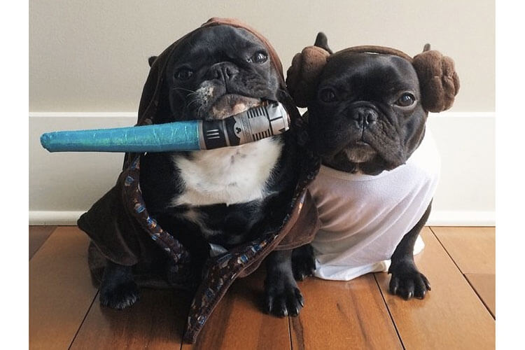 starwarsdogs4.jpg
