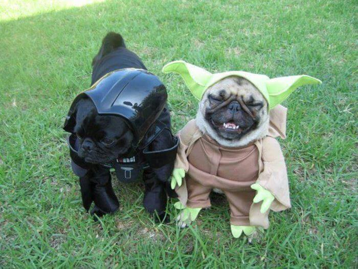 starwarsdogs5.jpg