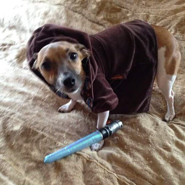starwarsdogs6.jpg