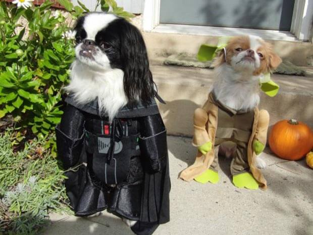 starwarsdogs7.jpg