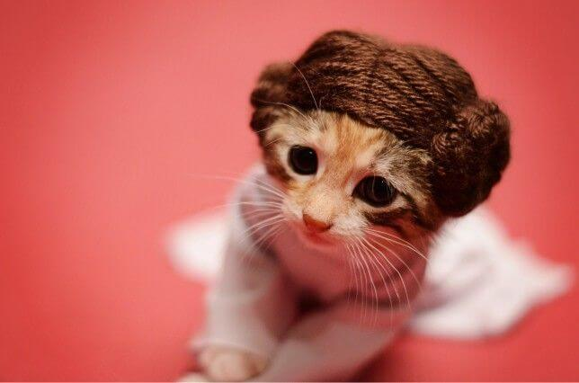 starwarspets-featured.jpg