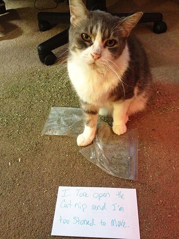 Cat Nip Fiend