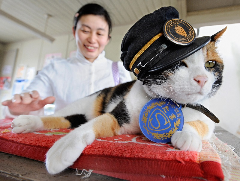 Tama the cat has helped boost her cities economy by 1.1 billion yen by being so cute!