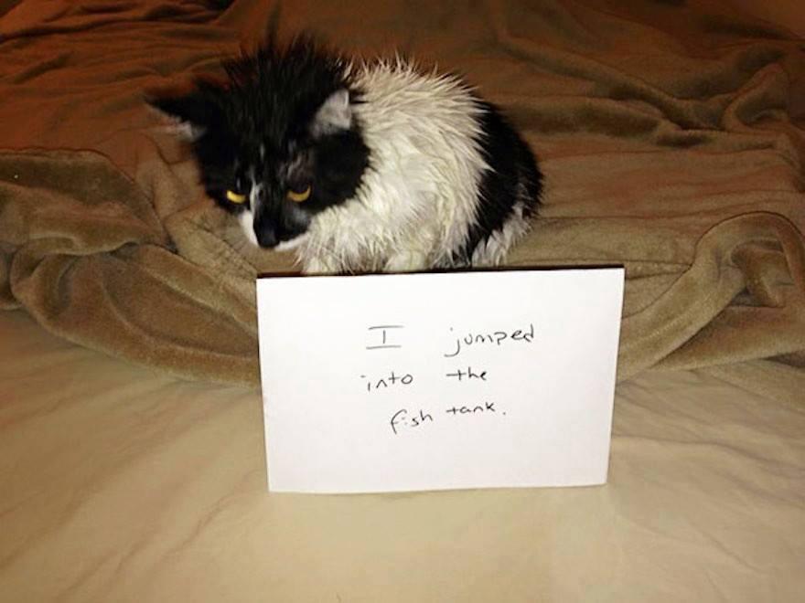 Showered In Shame
