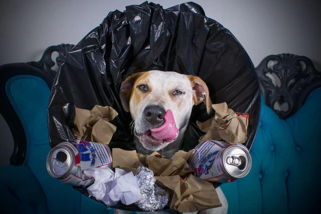 trash dog cone.jpg