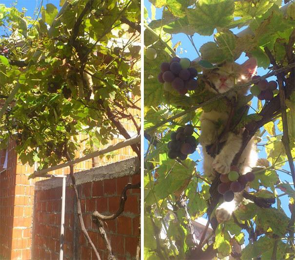 vineyard-kitty.jpg