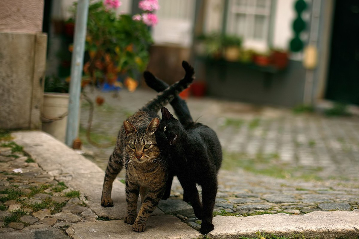 Cats Walking Side-By-Side