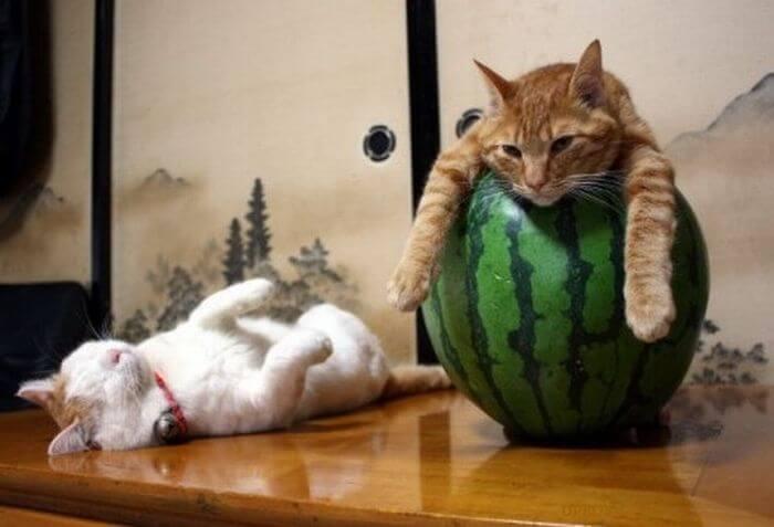 Watermelon Zzzzzzs