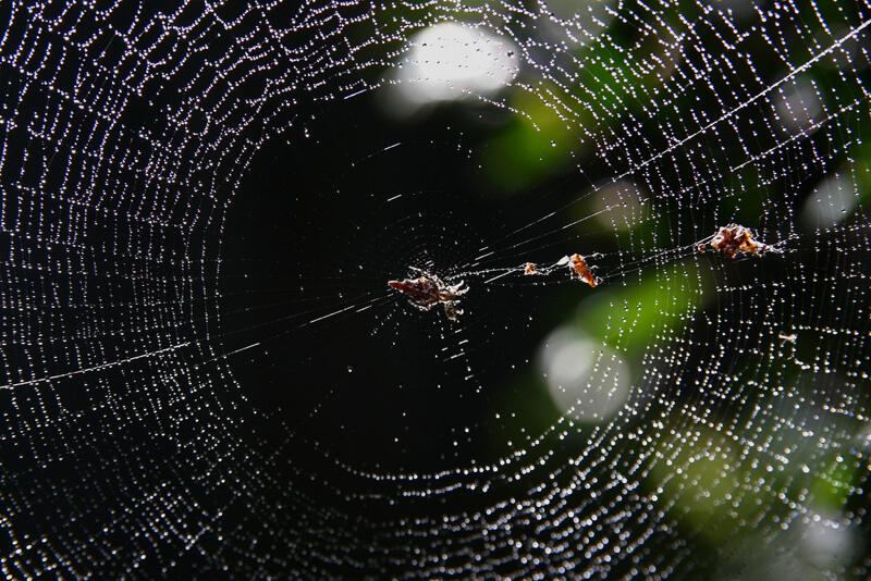 Arañas pueden dar miedo, pero sus redes son espectaculares