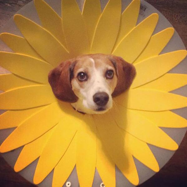 wide eyed flower dog.jpg