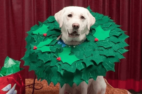 wreath doggie.jpg