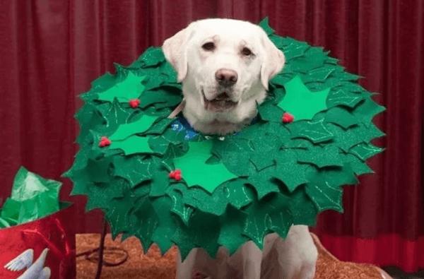 wreath doggie.jpg