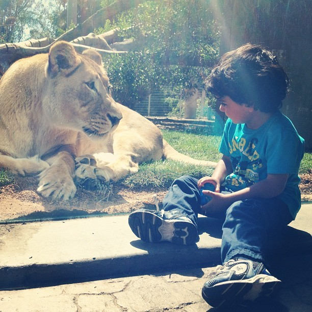 A little Kid and a big cat at the zoo