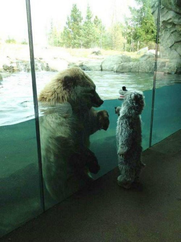 Bear and Little Child Meet at the Zoo
